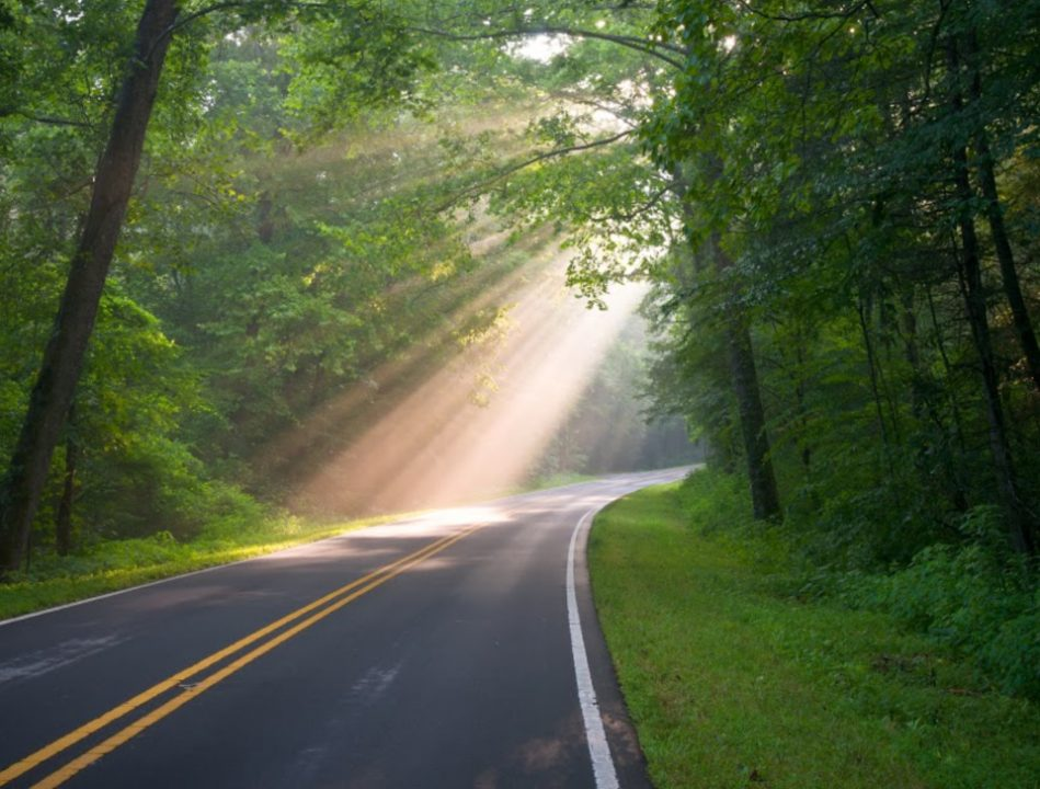 Country Road Sun Beams and Rays Through Trees in Davie County NC